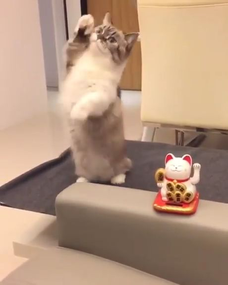 Cute cat playing with a toy. #adorablepuppyvideos