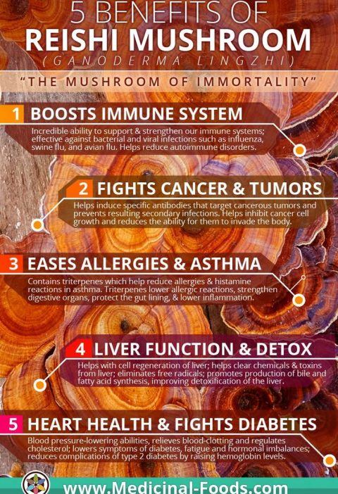 Reishi Mushroom Benefits: A Complete Guide by Medicinal Foods™